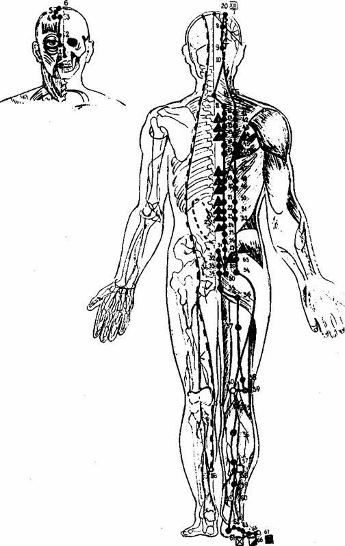 У цин чжун инструкция по применению человеческого организма скачать